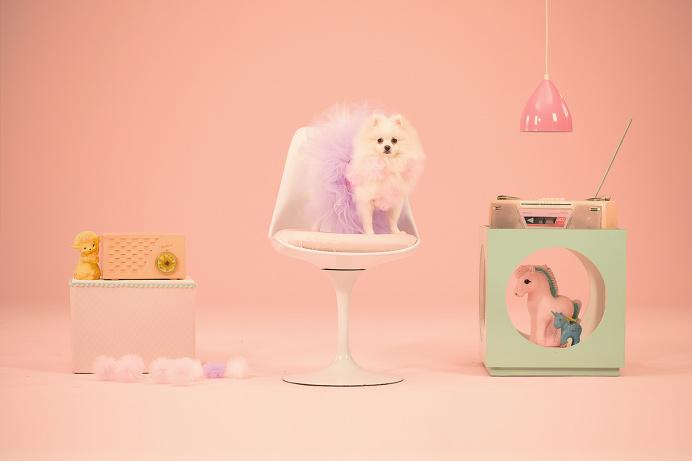 LG Smart Csre - Humans! #stage #dogs #fantasize #pink