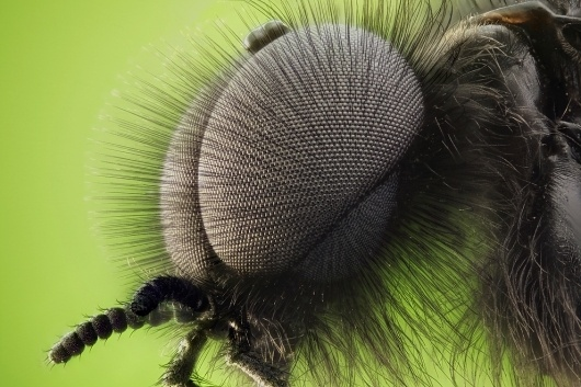 Nikon Small World Photomicrography Competition - The Big Picture - Boston.com #insect #photography