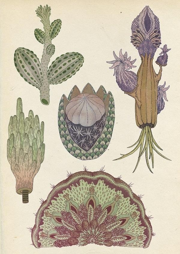Archive illustration | Feather and Webb #katie #smith #design #illustration #art
