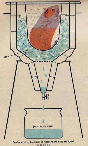 Whisper + Holler (momentitus: From a 1960's biology book (by...) #biology #design #book #illustration #vintage