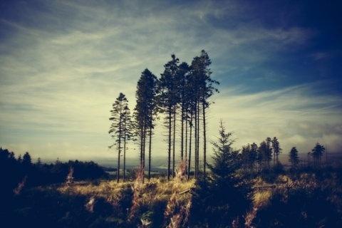 FFFFOUND! | Blog - thirtythr33.de - The Portfolio of Sebastian Bentler #blue #forest #tree #sky