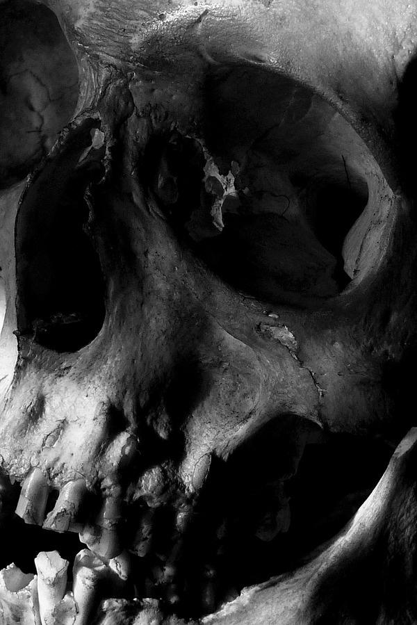 ryanmatthewcohn:Ryan Matthew's Collection. Photo by Sergio Royzen. #skull