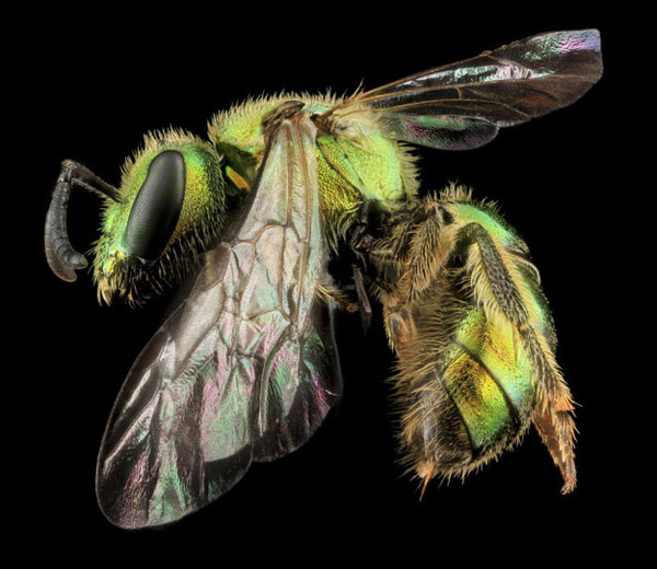 Awesome Macro Insect Shots #wasp #close #bee #insect #photography #animal #up #wings #macro #beauty