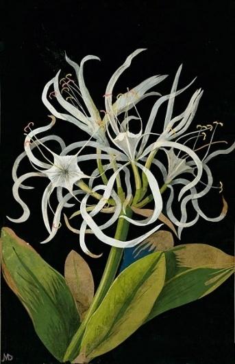 DESIGN - T Magazine Blog - NYTimes.com #flower #illustration