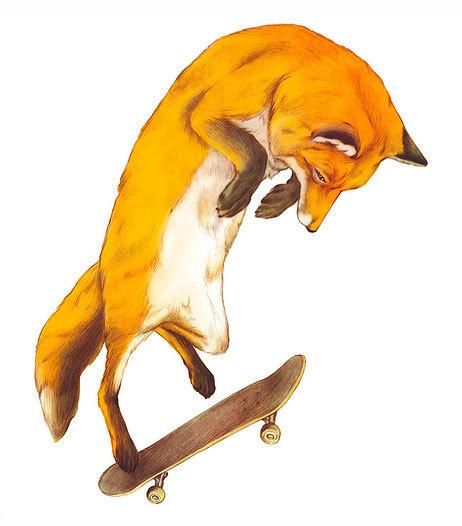 Fox doing the impossible! Illustration by Giuseppe Modica. More inspiring illustrations. __posted byweandthecolor//facebook//twitt #skateboard #illustration #skate #fox