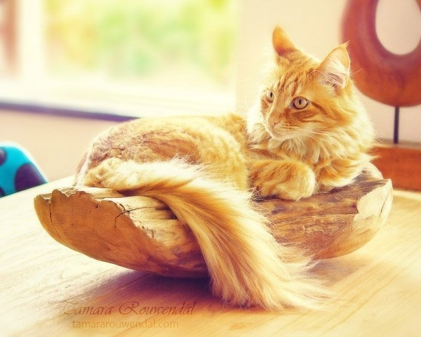 Cats Photography by Tamara Rouwendal #photography #cats