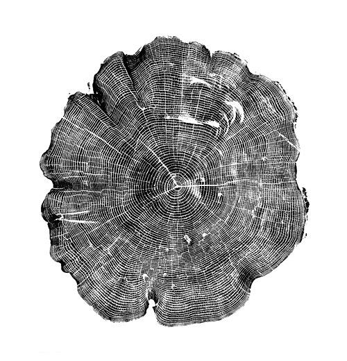 tumblr_l775dpBfRC1qbvanto1_500.jpg 500×520 pixels #wood