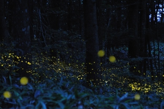 Magical Long-Exposure Firefly Photos Go Viral | Raw File | Wired.com #firefly