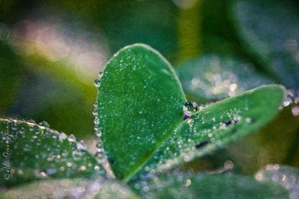 Photography by Alex Greenshpun #inspiration #photography #macro