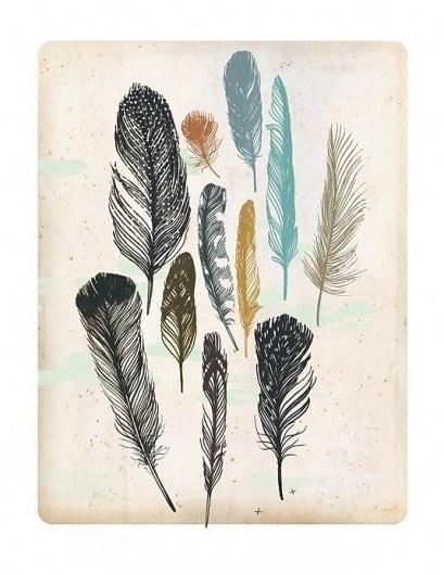 il_fullxfull.195097849.jpg 535×692 pixels #digital #illustration #drawing #feathers