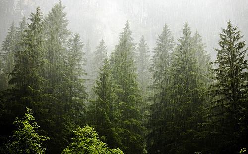 Standing Elements #photography #rain #forrest