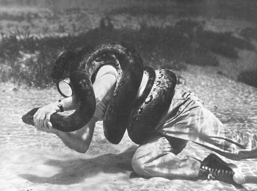 slyAPARTMENT #strangle #old #white #black #snake #and #underwater