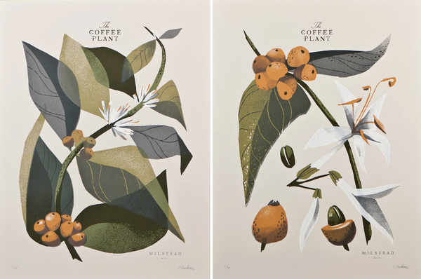 THE COFFEE PLANT Two 5 color screenprints 18