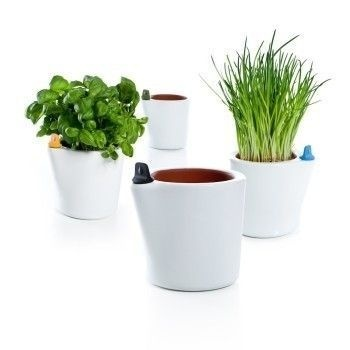 These terracotta flower pots are self watering, so you can keep your plants alive even while on short trips out of town. Porous water chambe #plants