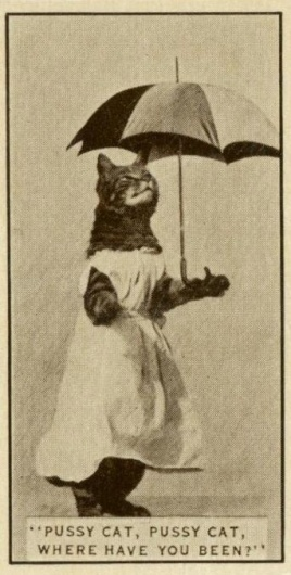 plastic+bertrand+016.jpg (342×675) #weird #vintage #cat