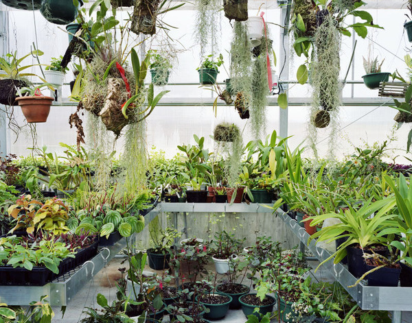 'Workspaces', an exploration into the places we make by Meggan Gould #interior #botanical #plants #greenhouse #garden #botany #workspace #orchid #orchids
