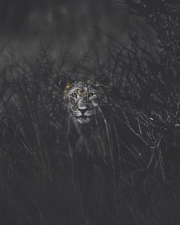 Breathtaking Portraits of Wild Animals by Donal James Boyd