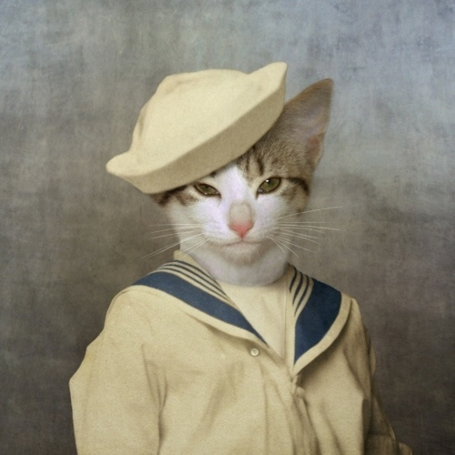 Kitschy Living #sailor #cat