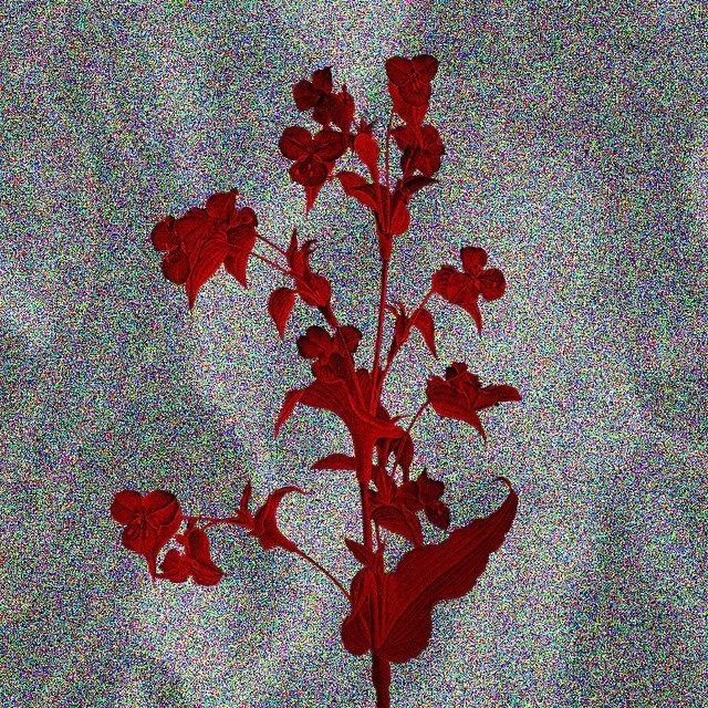 #friday #flower #series 02 —B.