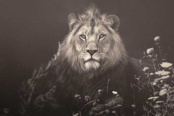 africa-souls-zoo-photography-manuela-kulpa-3 #photography #animals