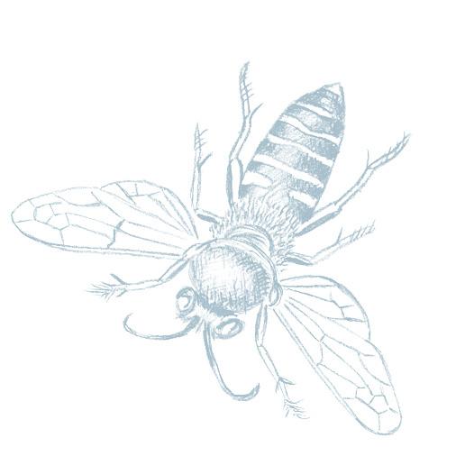 Blis Manuka Honey, Raw, Organic | Branding and Packaging Design | Studio Marche