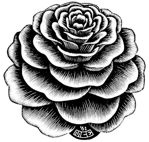 flower_1.jpg (622×597) #rose