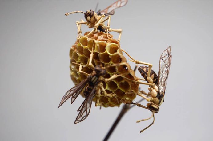 Incredibly Lifelike Insects Crafted out of Bamboo by Noriyuki Saitoh 9 Incredibly Lifelike Insects Crafted out of Bamboo by Noriyuki Saitoh