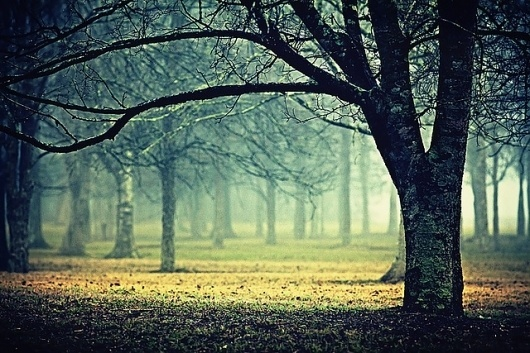 extend   Flickr - Photo Sharing! #fog #landscape #mist #nature #photography #trees