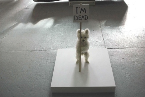 Jonas Eriksson » Every Reason to Panic #taxidermy #maltese #photography #puppy #art #death #dog