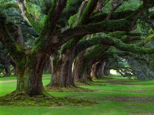 p7z3N.jpg (1600×1200) #trees