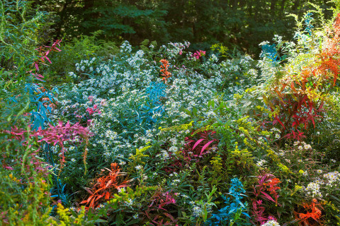 'Exaggerations' by Jackson Hallberg   PICDIT #photo #color #photography #colour #plant
