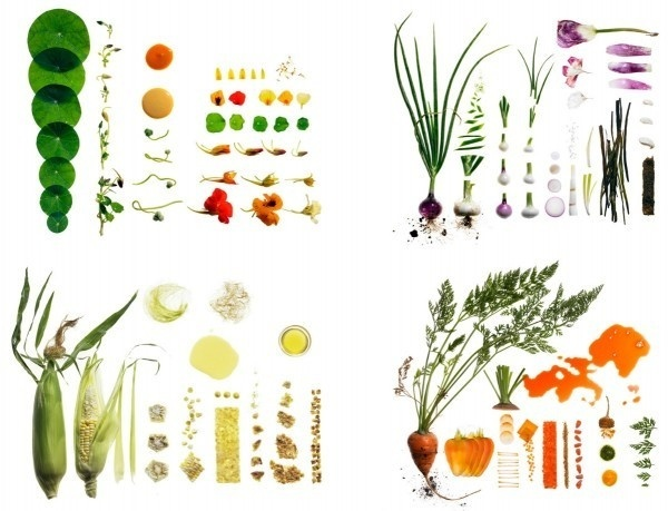 food photography maren caruso 1 #ingredients #photography #conceptual #food