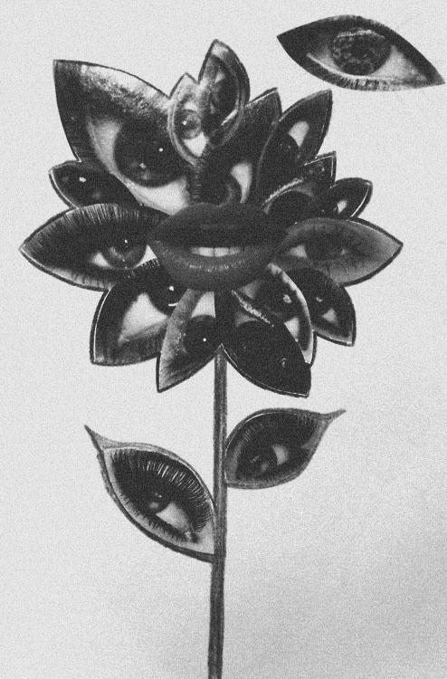 http://jencheema.tumblr.com/post/27198709344 #flower #eye