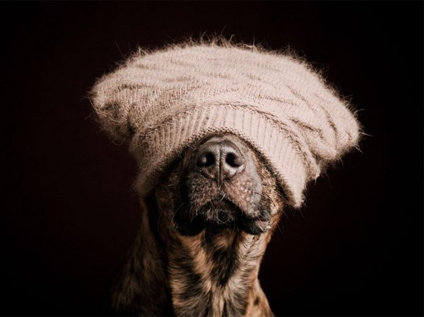 Cute and Funny Dog Poses by Elke Vogelsang #dogs #Animals #photography #cute