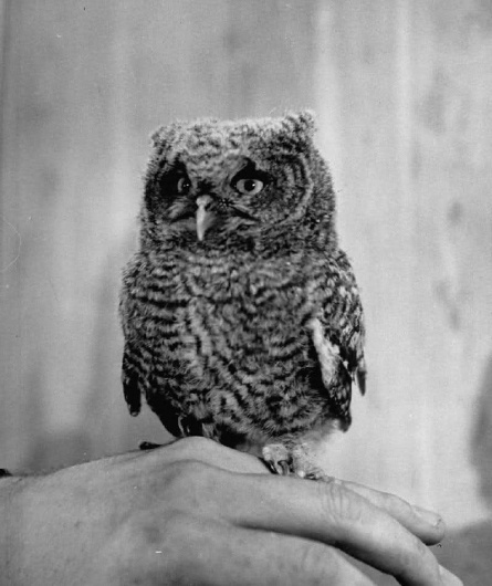 tumblr_m2ackqclHK1qb9akzo1_1280.jpg (799×950) #owl