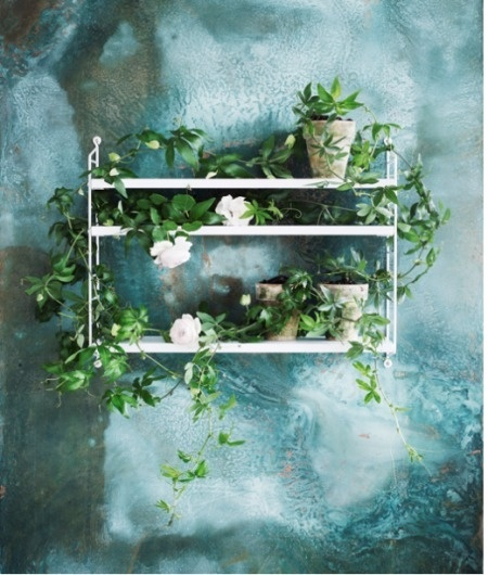 Volang #string #shelf #flowers