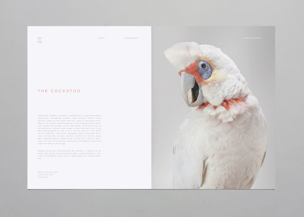 Birds on Behance #print #publication