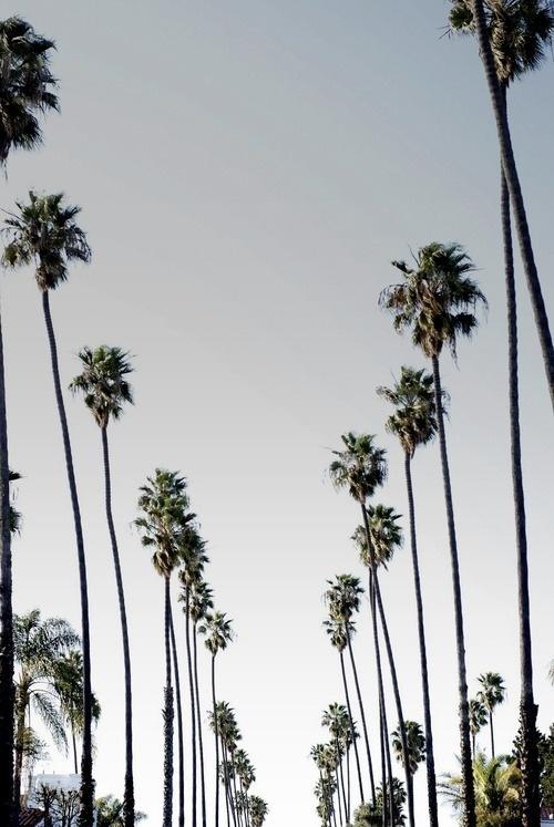T H E D I G G E S T . C O M #palm #los #angeles #trees #social