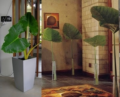 10 Most Stylish Plants on Interior Design for 2010 ~ home of the GoodLorax #plant