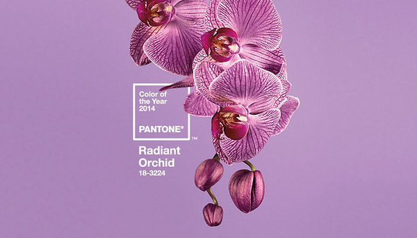 Pantone unveils 2014 color of the year   Webdesigner Depot #orchid #pantone #flowers