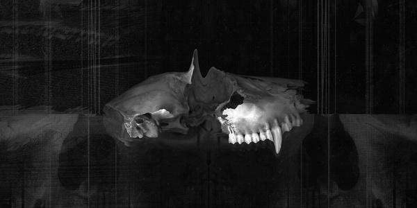 work ≫ GLITCH : Noran Bakrie #skeleton #bakrie #black #noran #animal #glitch #twist #dark #error