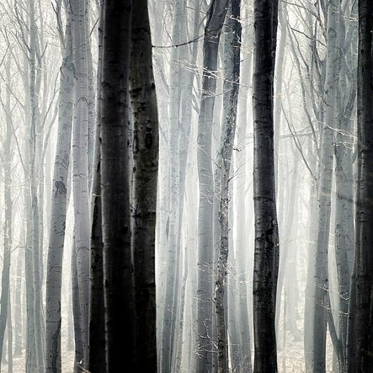 bec60678b039b0cf744326bea645ab72.jpg 600×600 pixels #threes #forest #photography