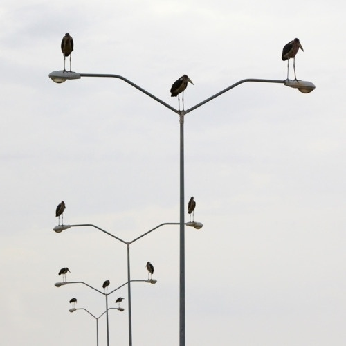 Lustik #white #black #birds #photography #and