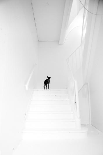 Convoy #white #black #photography #minimal #and #dog