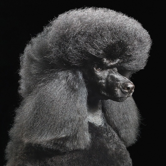 Dogs Gods by Tim Flach tim_flach_dogs-gods-1 – TrendLand: Fashion Blog & Trend Magazine #hair #photography #dogs