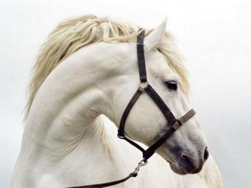 tokyo-bleep #horse #photography #white