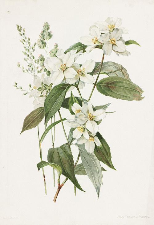 image #illustration #flowers