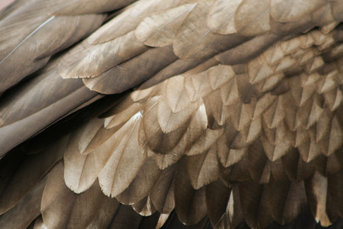Feathers #feathers #bird