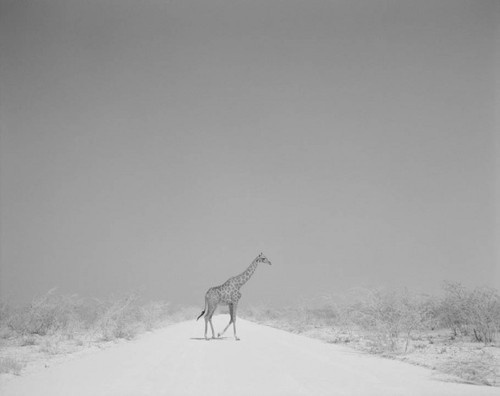 Garth Meyer . Namibia, 1999 #photo