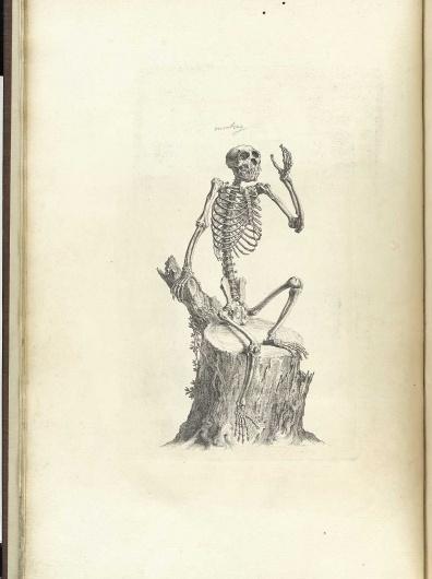 cheselden_p12.jpg 1200×1605 pixels #skeleton #drawing #ape
